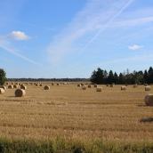Angla Windmills